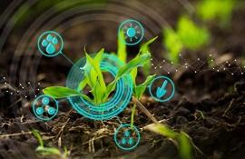 Insieme per la salute delle piante: grande evento online di Aiph