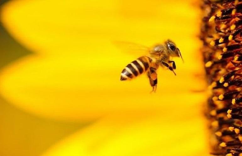 Bando sostegno apicoltura