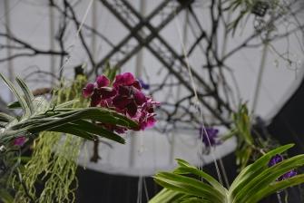 FloraFirenze 2015_6