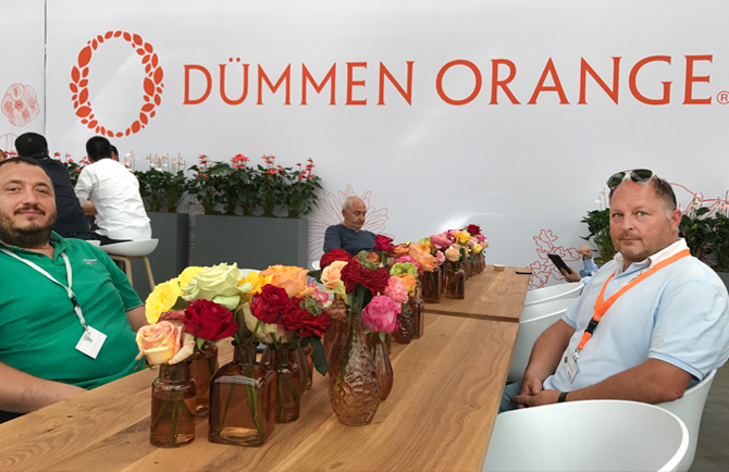 dummen orange, floraviva, flower trials