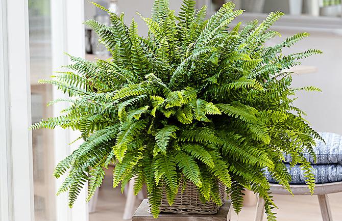 Cosa ne pensate della bio urna societ e costume quag - La felce pianta ...