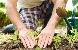 Lavori di maggio in orto, giardino e frutteto