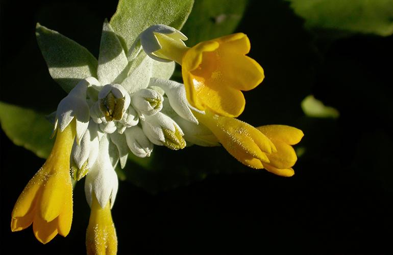Venti piante per un'Italia biodiversa