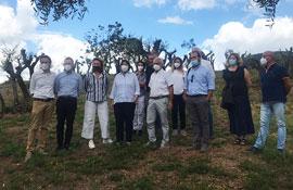 Recupero patrimonio olivicolo toscano: Saccardi in visita nel Montalbano