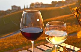 Castellucci (Confagricoltura) sul vino: duri colpi dal Covid, rimodulare gli aiuti